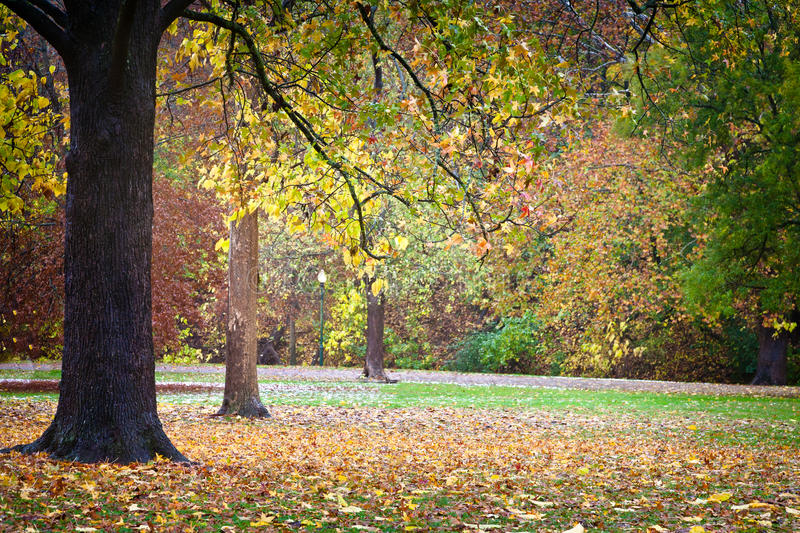 Fall Leaves in the Park. A line of trees displaying Autumn colors in Ritter Park, one of the United States top ten city parks located in Huntington, West royalty free stock photos