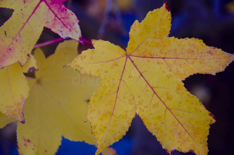 Fall Leaves. At the park royalty free stock photo