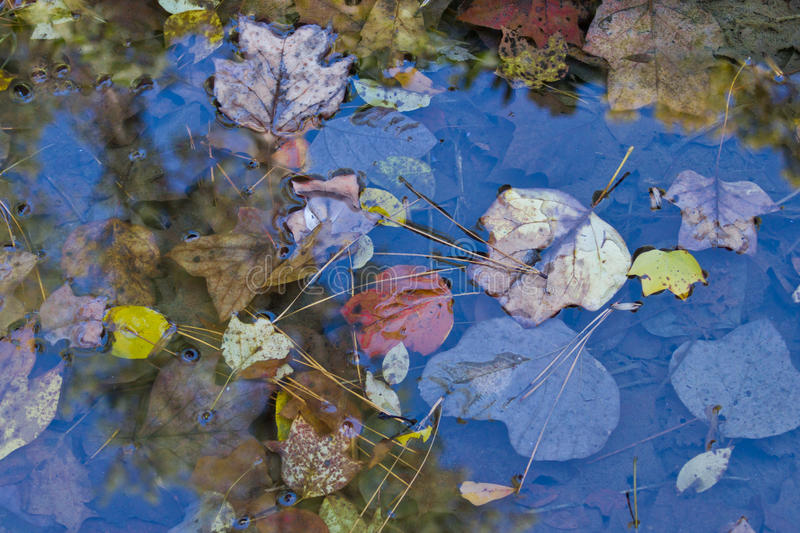 Fall Leaves In A Pool Of Water Stock Images