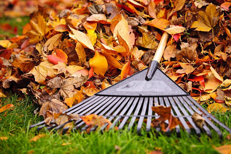 Fall leaves with rake stock photography