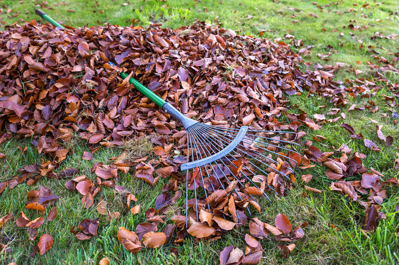 Fall Leaves with Rake royalty free stock photos