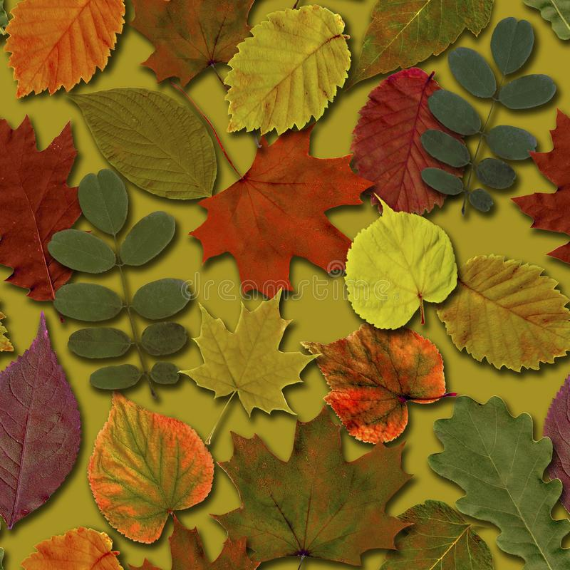 Fall leaves seamless pattern background. Autumn leaf colorful foliage royalty free illustration