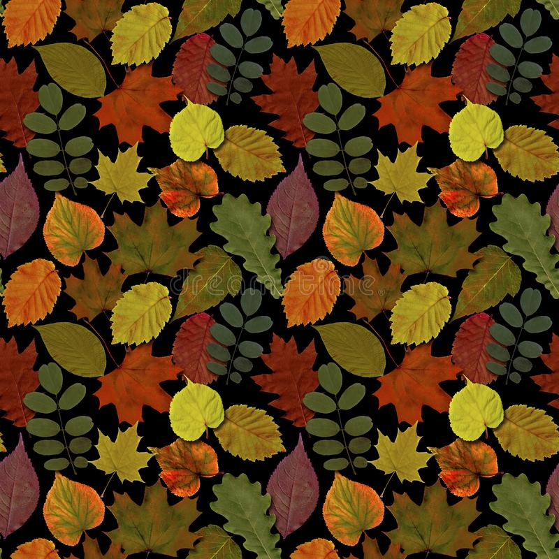 Fall leaves seamless pattern background. Autumn leaf colorful foliage stock image