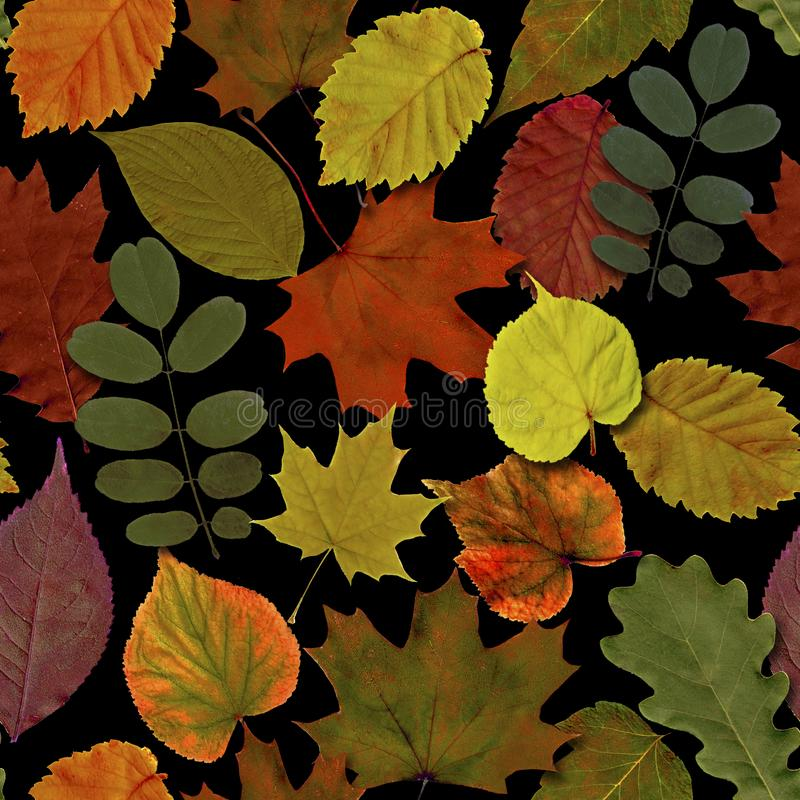 Fall leaves seamless pattern background. Autumn leaf colorful foliage. Beautiful bright yellow orange green red nature endless texture on black background vector illustration