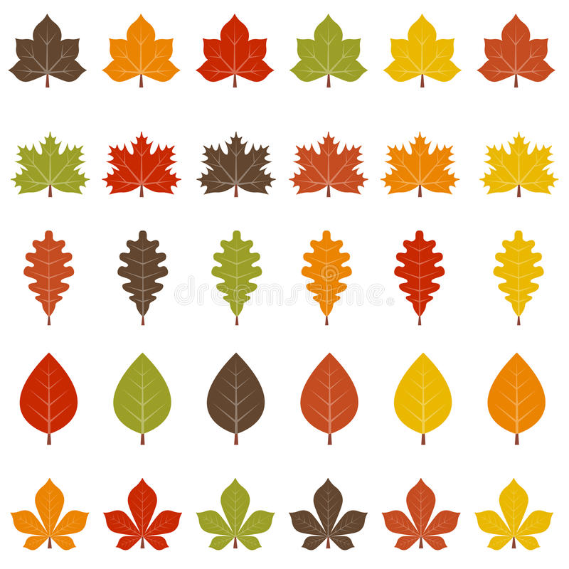 Fall leaves. A set of colorful fall leaves