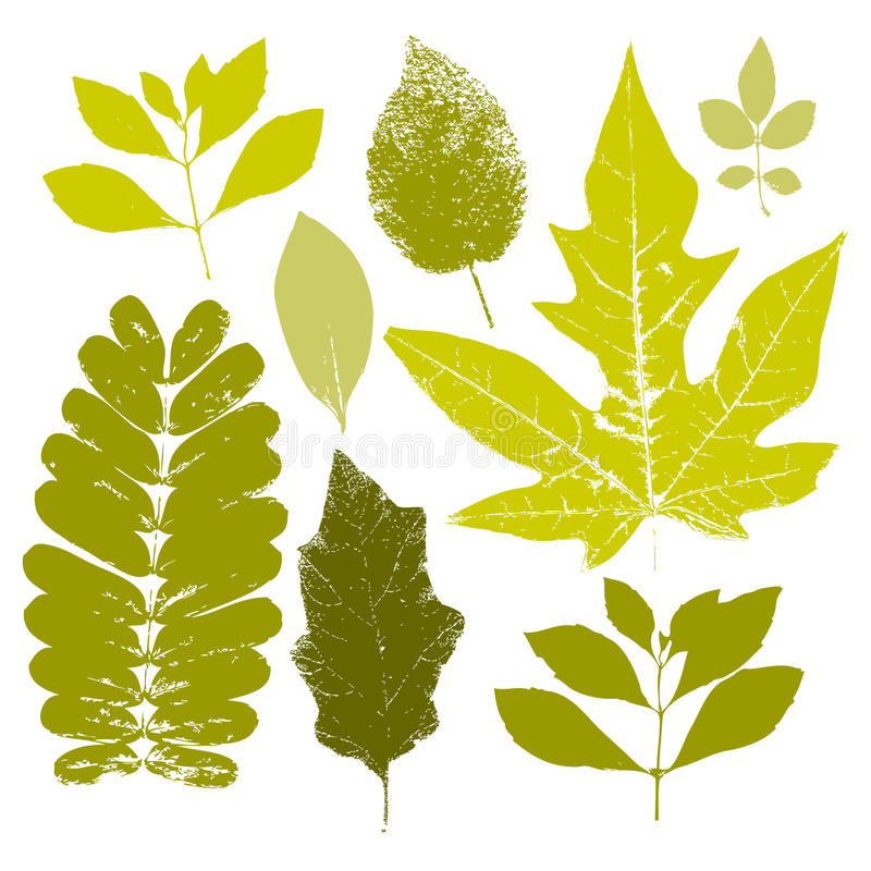 Fall leaves set. Fall green trace set of leaves royalty free illustration