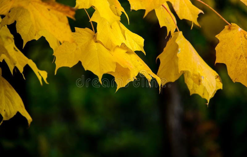 Fall leaves with space for text royalty free stock photography