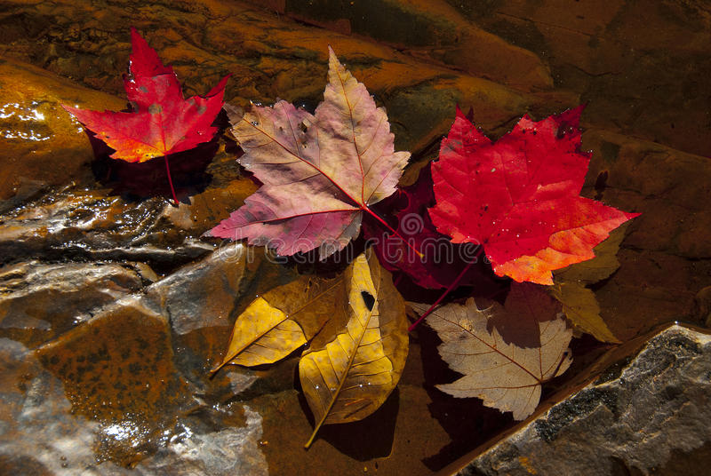 Download Fall leaves in stream stock image. Image of colored, autumn - 15269301