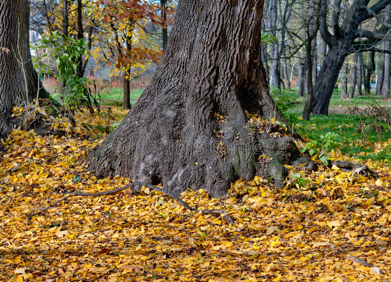 Download Fall leaves trees stock image. Image of design, natural - 45023455