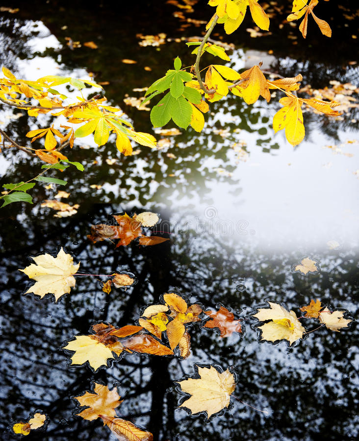 Fall leaves on a water. Autumn leaves and water level stock photography