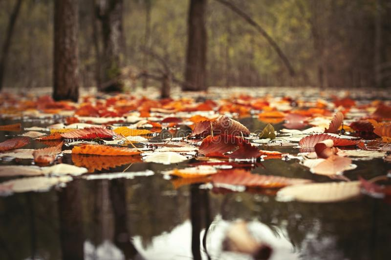Fall leaves. On the water stock photography