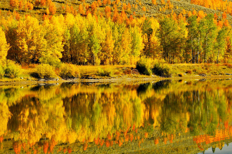Fall leaves and water reflections. Fall leaves reflected back in mountain lake royalty free stock photography