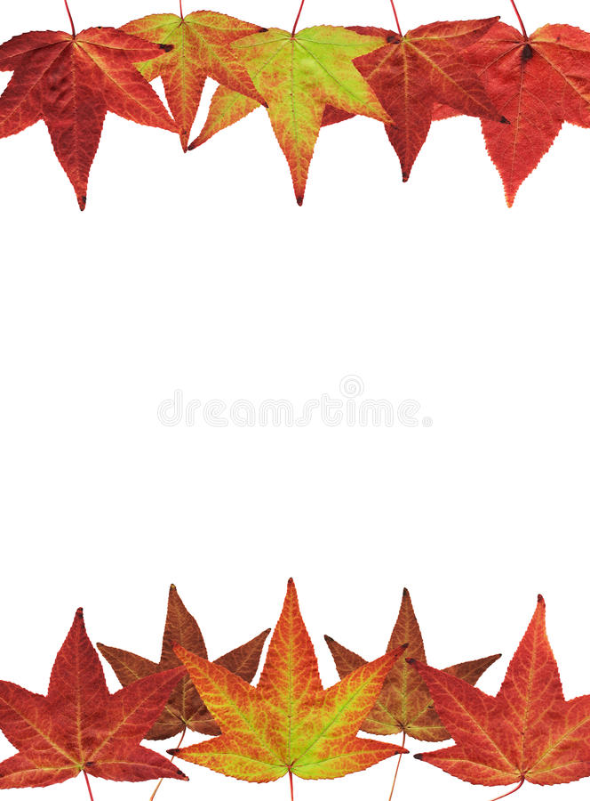 Fall Leaves on White. Colorful fall leaves on a white background. File includes a clipping path royalty free stock images
