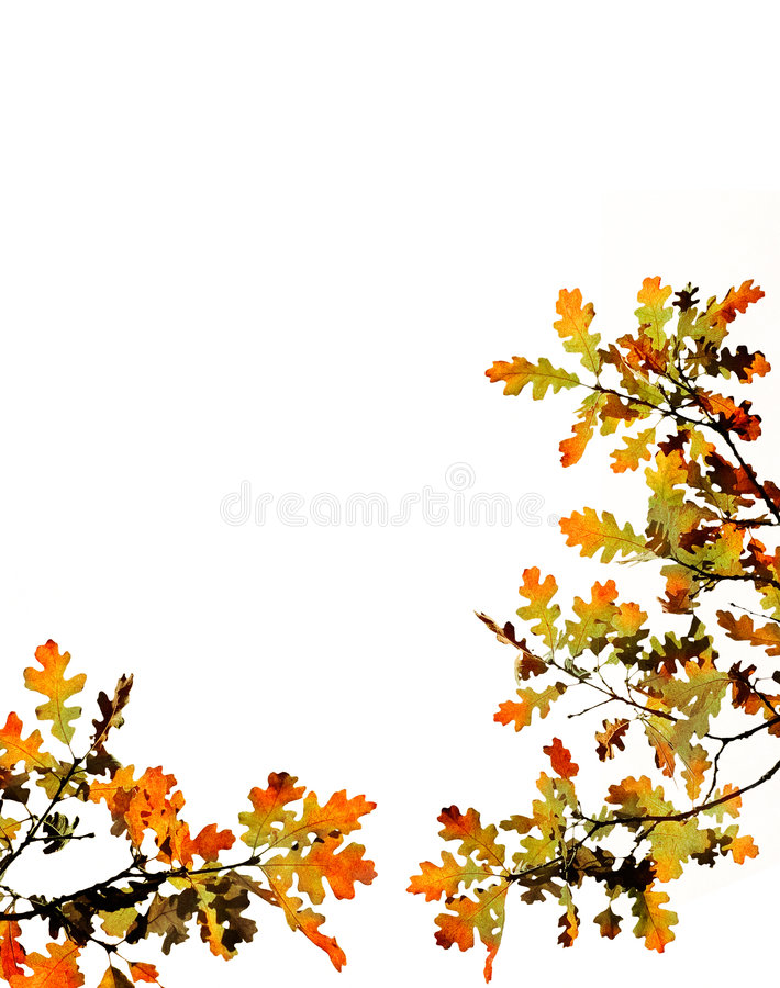 Fall Leaves on White. Multi-colored fall leaves on a white background with clipping path royalty free stock photos