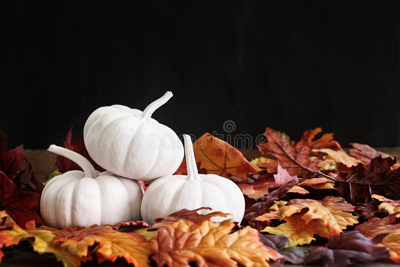 Fall Leaves and White Mini Pumpkins royalty free stock photography