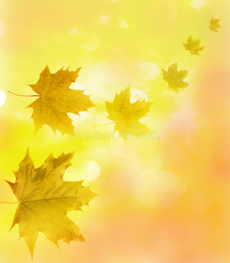 Fall maple leaves stock illustration