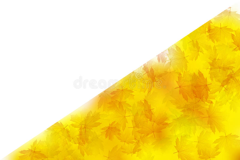 Download Fall maple leaves stock photo. Image of forest, gold - 25477196