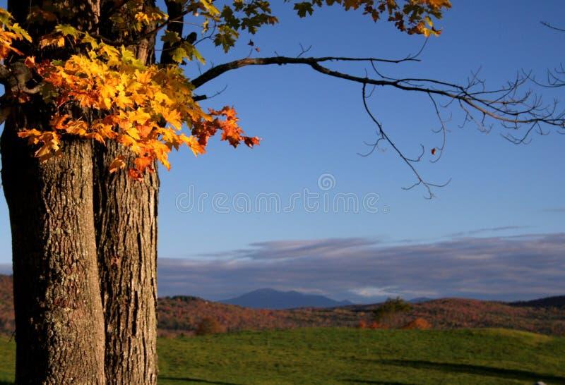 Download Fall Maple Tree stock photo. Image of tree, horizon, mountains - 16403304
