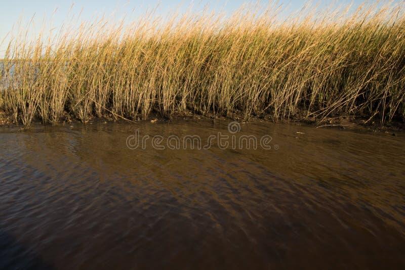 Fall Marsh royalty free stock photo