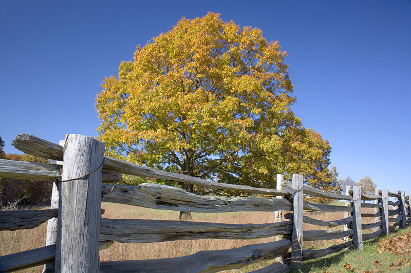 Fall Meadow royalty free stock photo