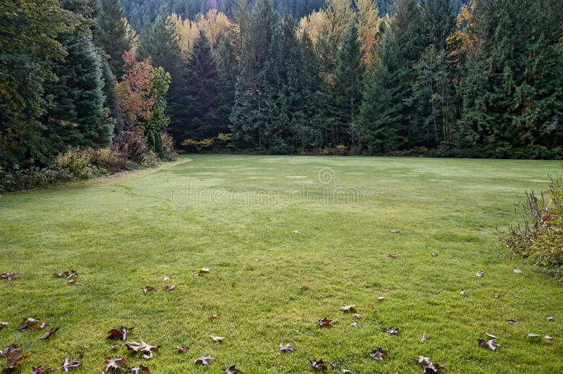 Download Fall meadow stock photo. Image of outdoors, morning, foliage - 24841360