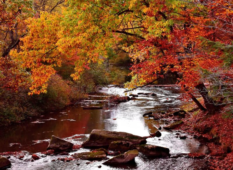 Fall Mountain Stream stock images