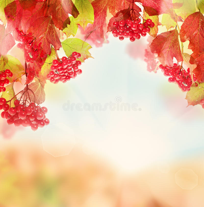 Fall Nature Background with Red Berry, Autumn Leaves. And Sun Light royalty free stock photo