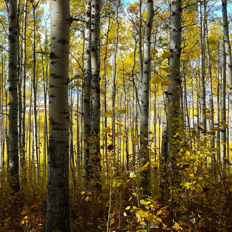 Fall in Northern British Columbia stock images