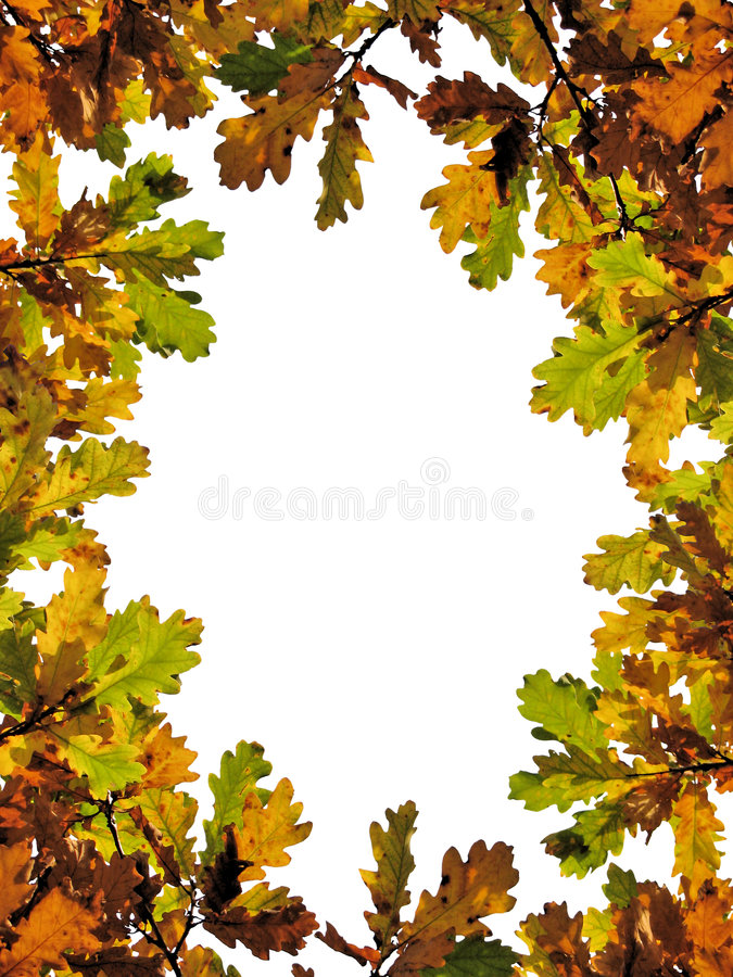 Fall oak leaves. Frame made of autumn leaves stock images