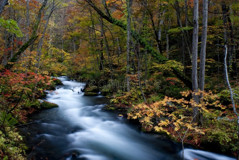 Download Fall Of Oirase, Japan Royalty Free Stock Photo - Image: 8673185