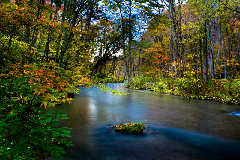 Fall of Oirase, Japan. This is very famous river for the person like to take the river photo especilly in the fall season with red maple and leaf stock photo