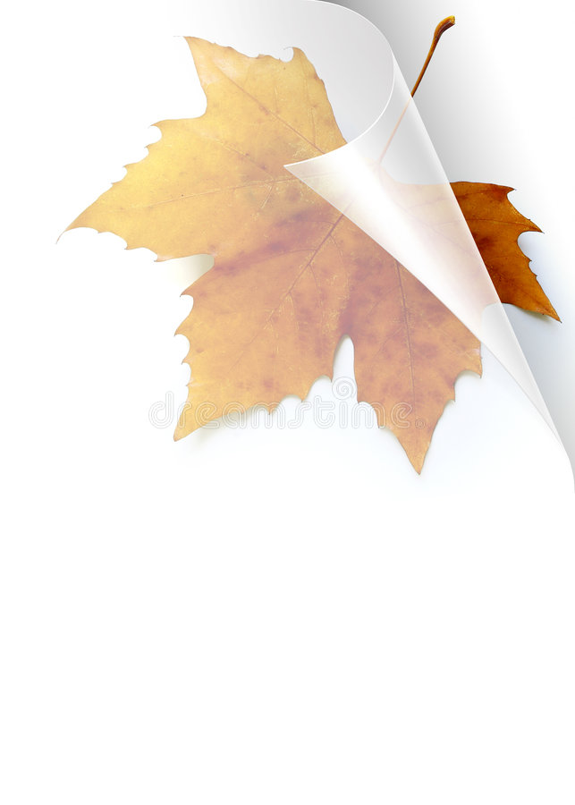 Download Fall Page stock image. Image of card, greetings, leaf - 6563369