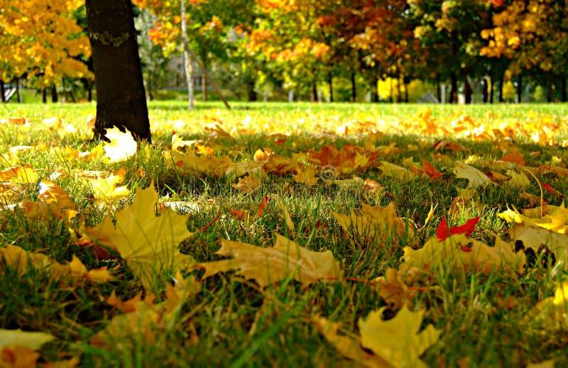 Fall in Park lizenzfreie stockfotografie