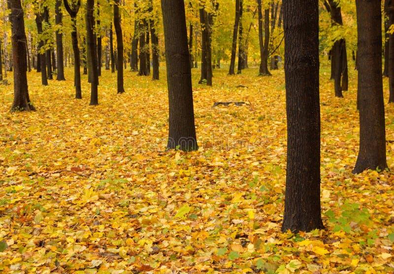Fall park royalty free stock photography