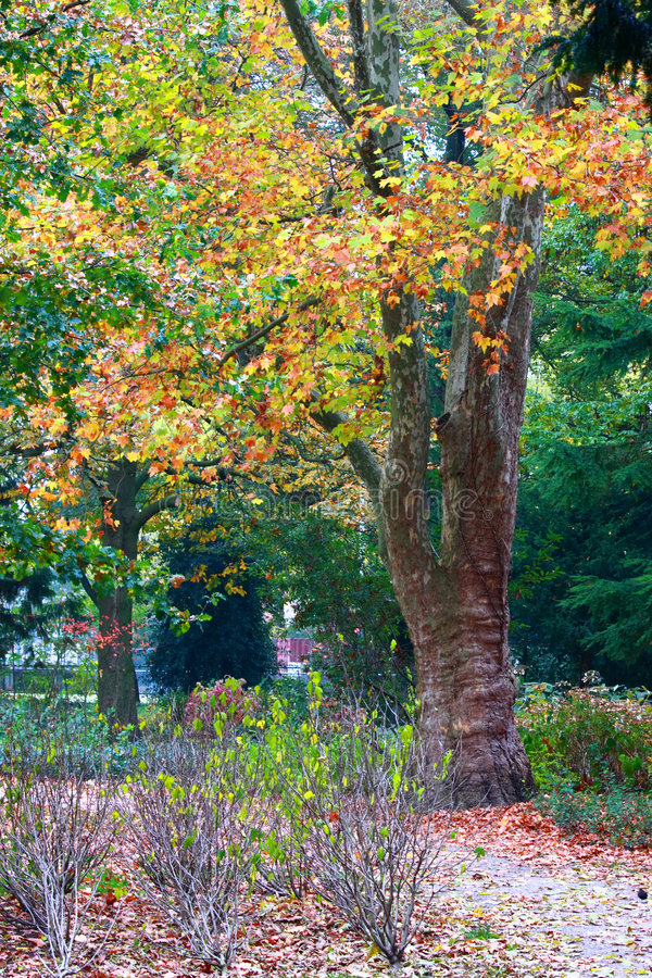 Download Fall in the park stock photo. Image of autumn, forest - 3501688