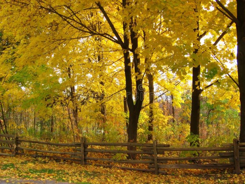 Fall park stock photography