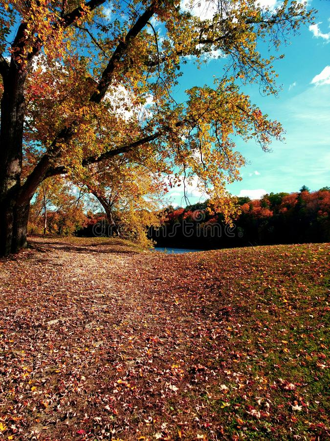 Fall in the park royalty free stock images