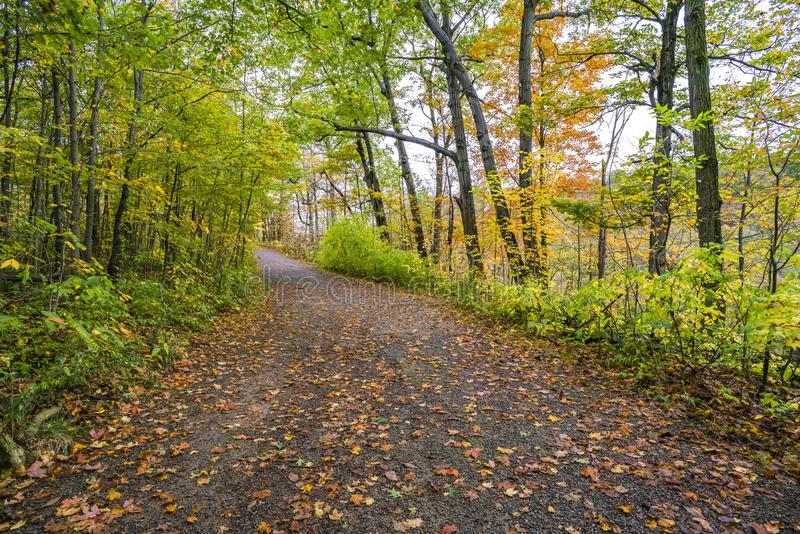 Fall path covered with orange and yellow leaves leading through stock photos