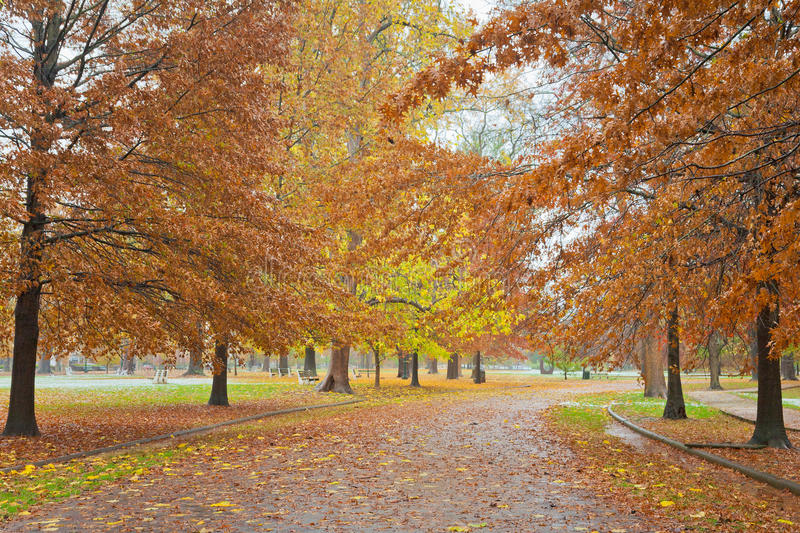 Fall Path in the Park. Fall colors in Ritter Park, one of the United States top ten city parks located in Huntington, West Virginia stock image