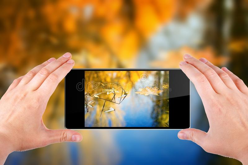 Fall photograph. Hands holding abstract smartphone and take picture of orange leaves on pond