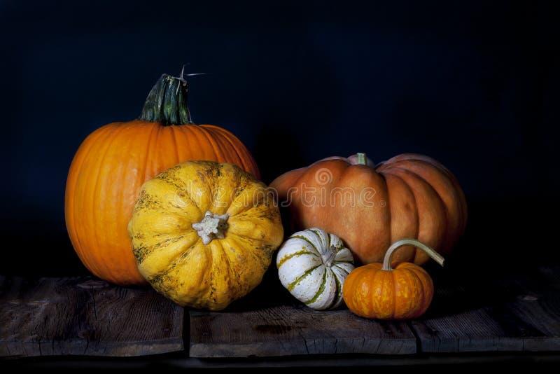 Fall Pumpkin Group stock images