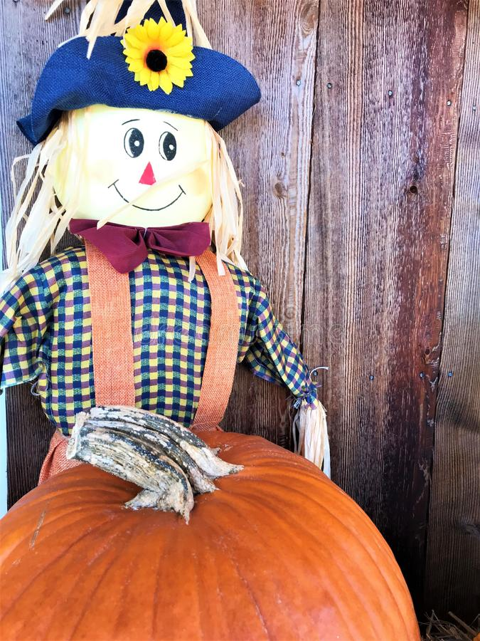 Fall pumpkin and scarecrow decoration royalty free stock image