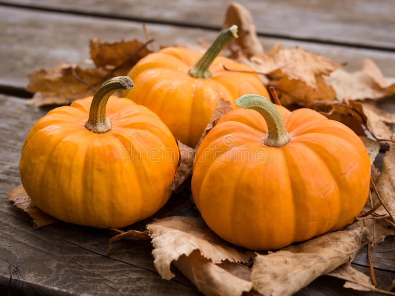 Fall pumpkins stock images