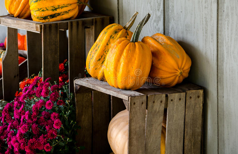 Fall pumpkins and mums. Spill out of weathered wood crates in this autumn display stock images