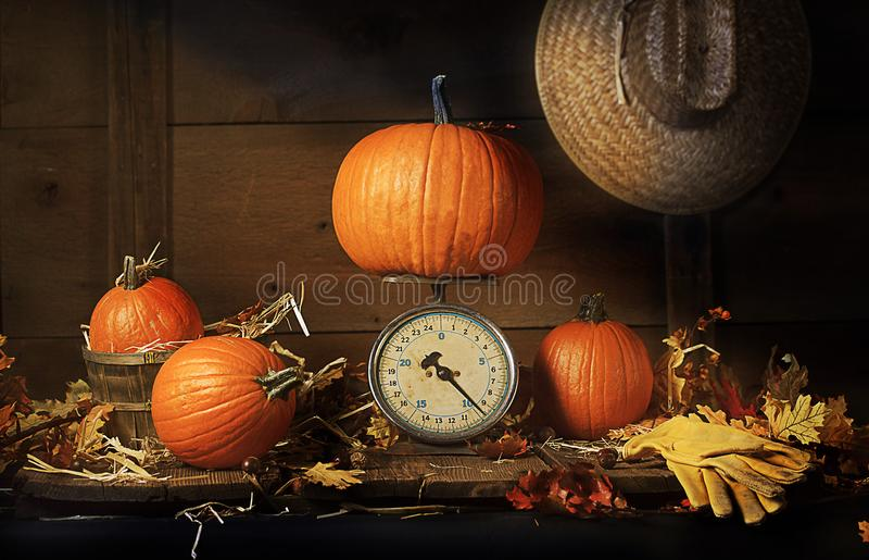 Fall Pumpkins Old Scale. Four pumpkins, three small and one large resting on vintage scale. Fall leaves scattered on wood surface, leather work gloves in stock photos