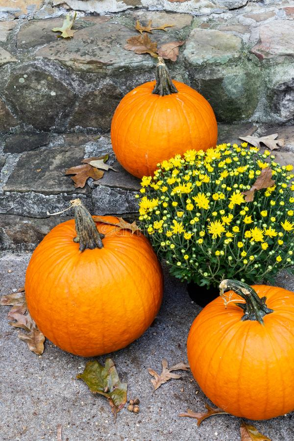 Fall pumpkins and yellow chrysanthemum on the front steps. royalty free stock photos