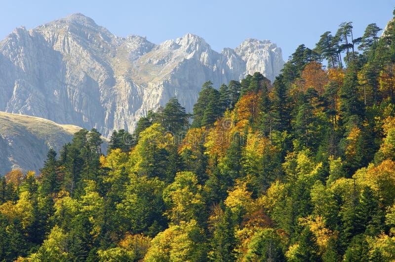 Fall in Pyrenees stockfotografie
