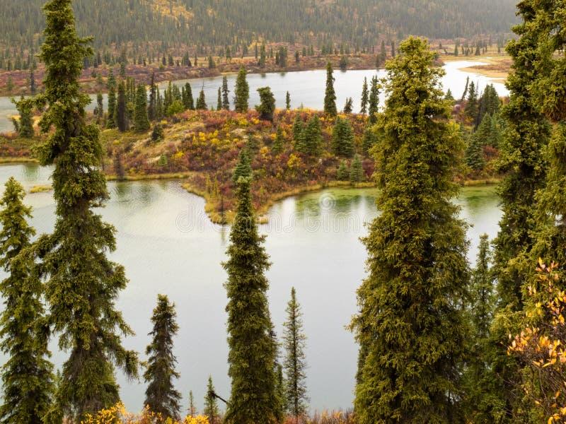 Download Fall Rain On Wilderness Lake, Yukon T., Canada Stock Image - Image: 25260349
