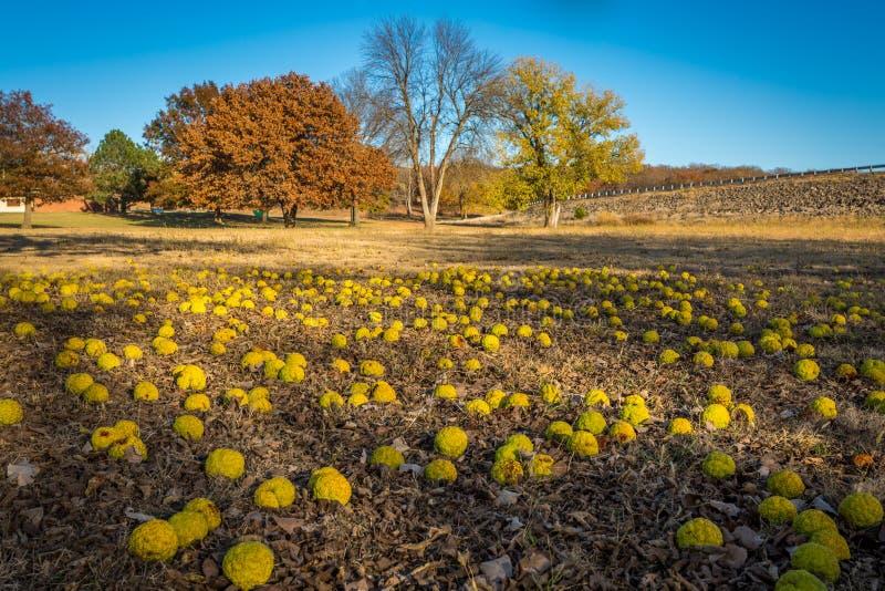 Fall River delstatspark Kansas arkivbild