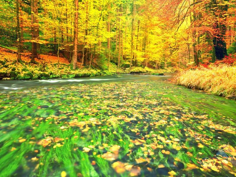 Fall River Estação do outono no rio da montanha Algas verdes fotografia de stock royalty free
